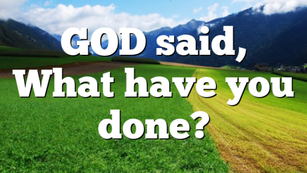 GOD said,  What have you done?