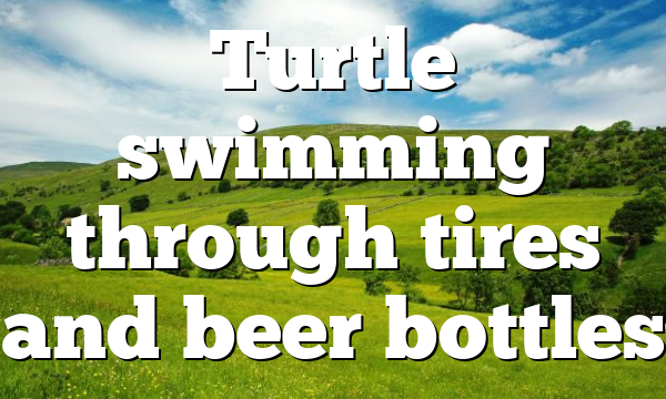 Turtle swimming through tires and beer bottles